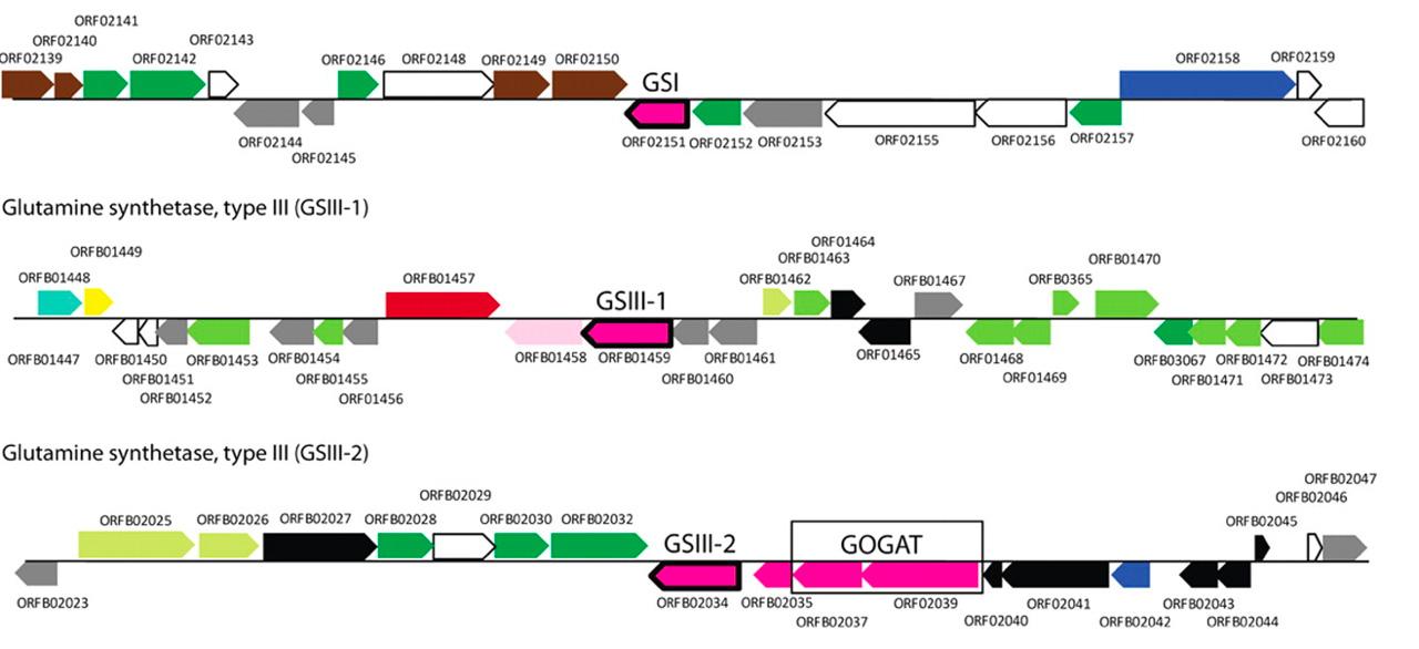 De novo Annotation - Computomics Molecular Data Analysis